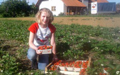 Eigene Freiland-Erdbeeren!